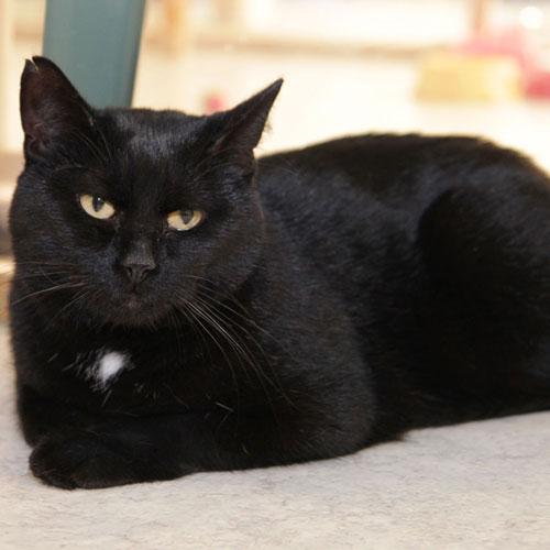 svart vita katter
